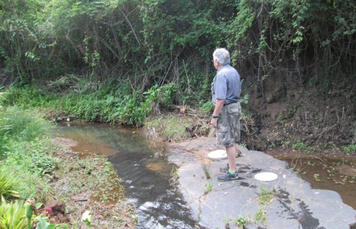 Bellowan stream walk