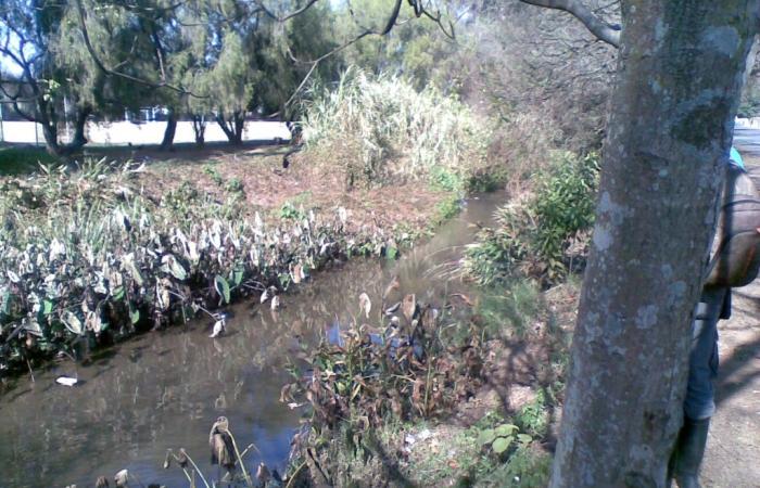 Dorpspruit River Walk 3
